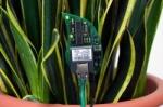 botanicalls_kit_in_plant_250